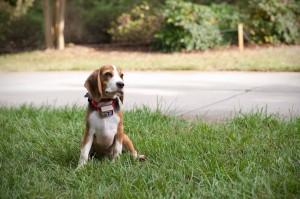 dog fence charlotte