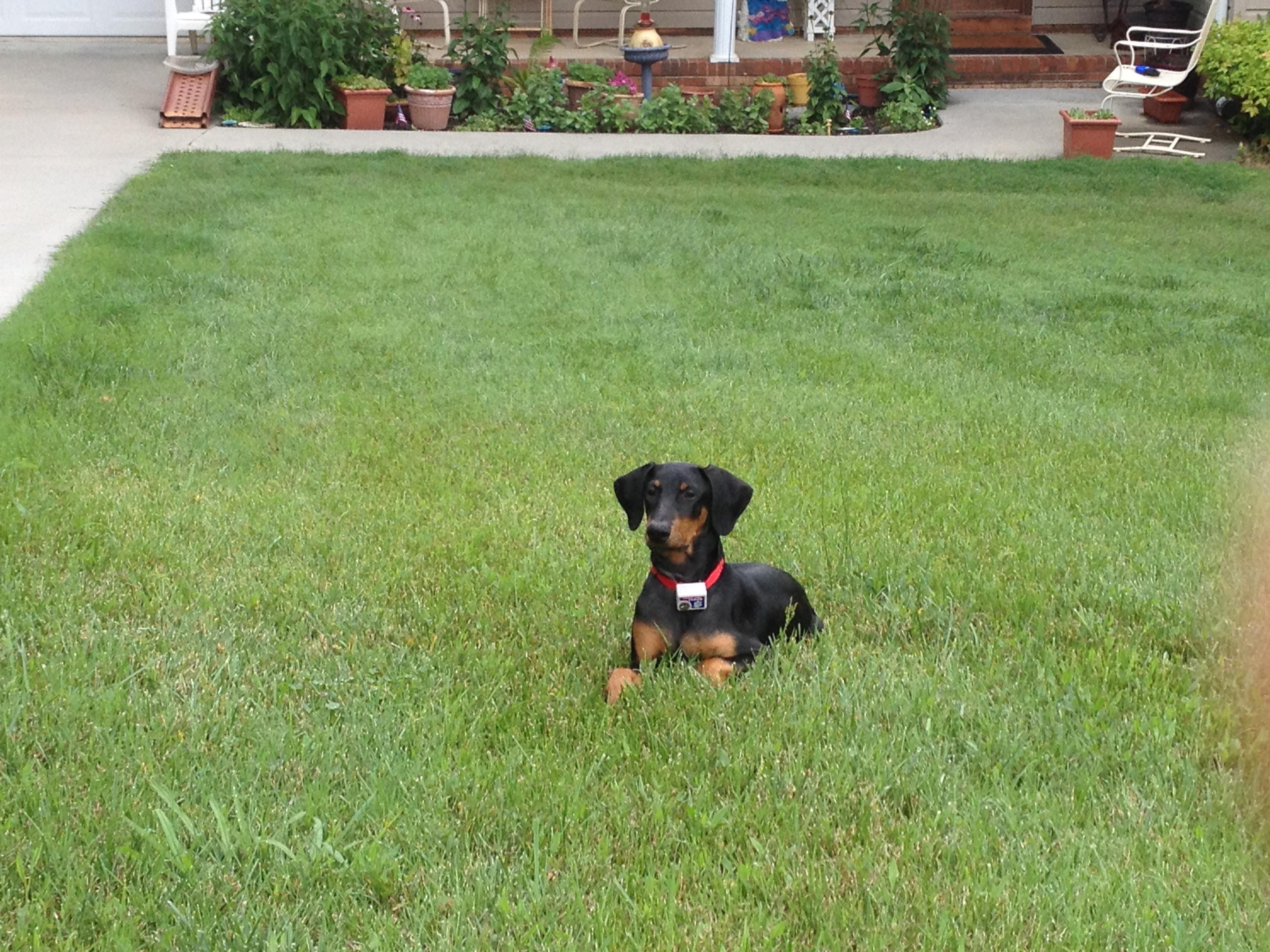 Waxhaw Pet Fencing